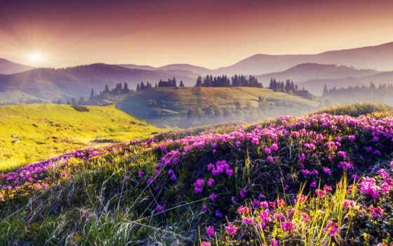 cvety, горы, природа, горах, trees, коллекция, лучшая, туман, загружено,