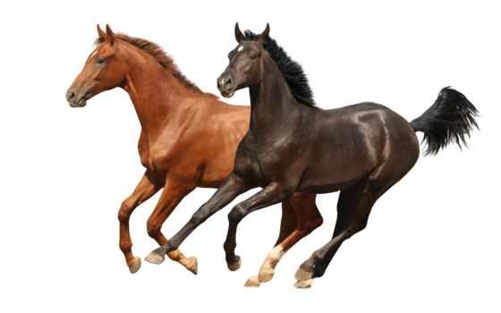 лошади, лошадей, фотообои, изображений, стоковое, увеличить, кб, изображение, стоковые, black, animals,