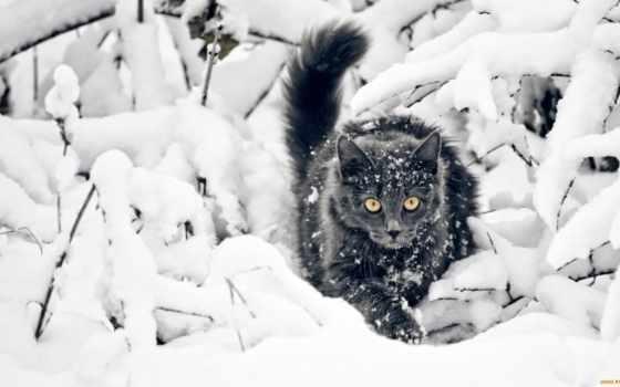 кошки, снег, zhivotnye, кот, снегу, winter,