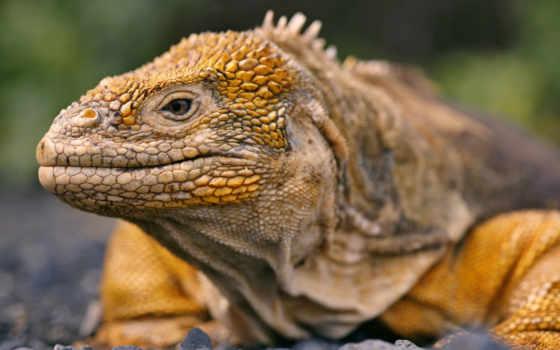reptiles, reptile, ecuador