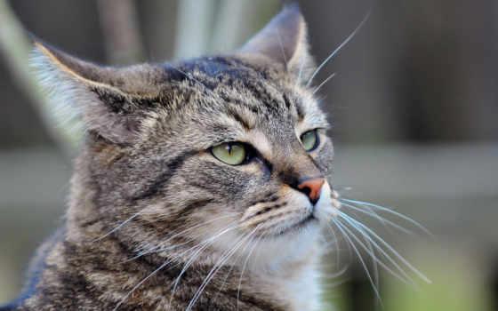 кот, you, cats, еда, tabby, но,