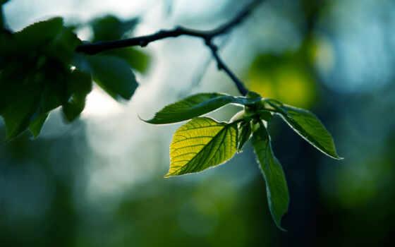 природа, drawing, листва, зелёный, девушка, журнала, веточка, растение