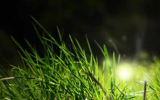 grass, wallpaper, is, illuminated, hd, футболка, new, fresh,