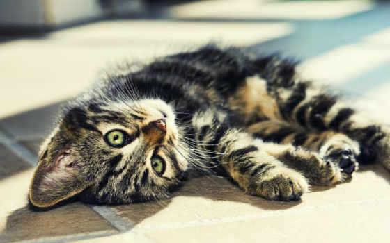 striped, кот, лежит