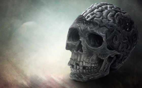 череп, explore, остов