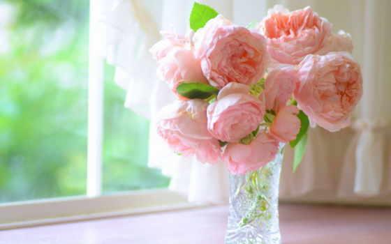 цветы, пионы, ваза, красавица, розовые,, лепесток, world, роза, цветов,