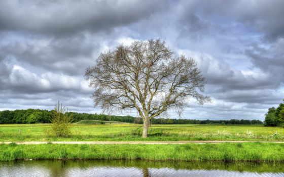 река, дерево, summer