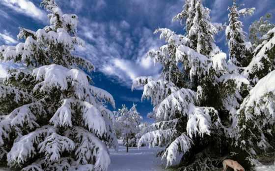 зимние, пейзажи -, душу, греют, природа, янв, собаки, дерево,
