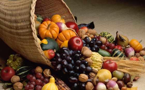 здоровой, диета, должна, бе, здоровая, science, полезные, пище, таково, понятия, питания,