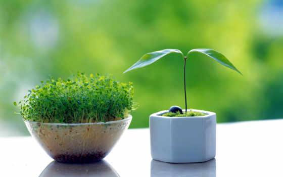 прохождение, портфель, cvety, plants, растения, весна, зелёный, oblaka, нояб,