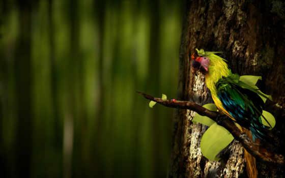 попугай, branch, попугаи, птицы, попугайчики,