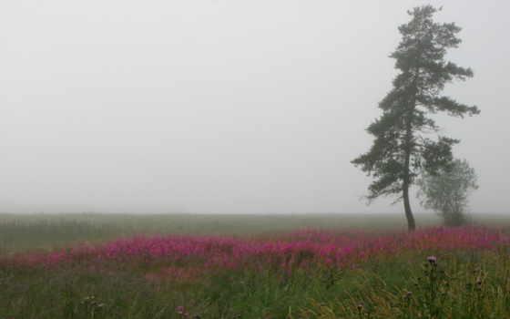 поле, природа, природы, красоты, cvety, дорога, пост, landscape, туман,