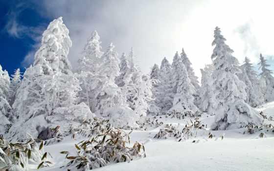winter, снег, лес, природа, высоком, качестве, covered,