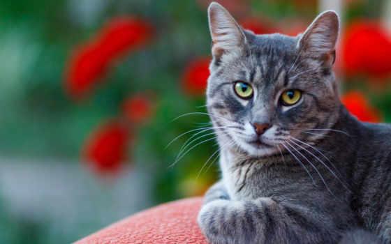 кот, фон, black,