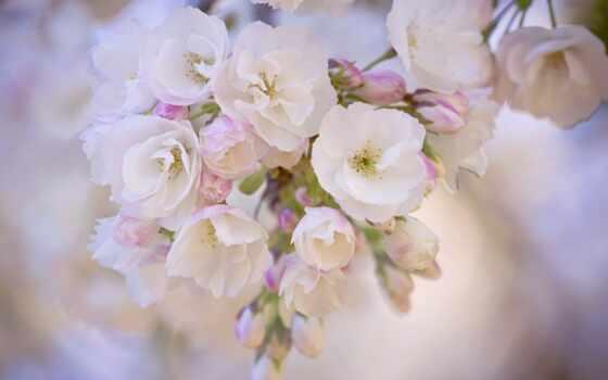 календарь, cvety, май, весна, страсть, simple, нужный, красивый, april