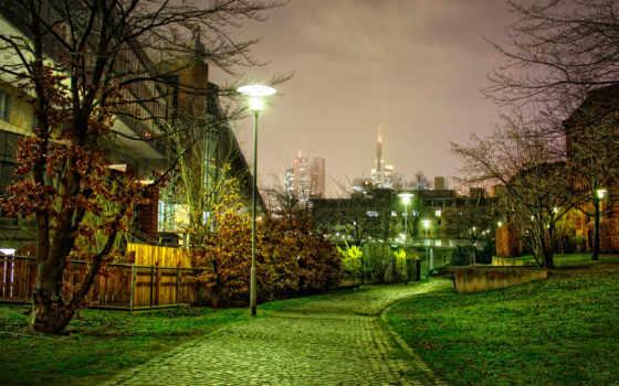деревья, ночная