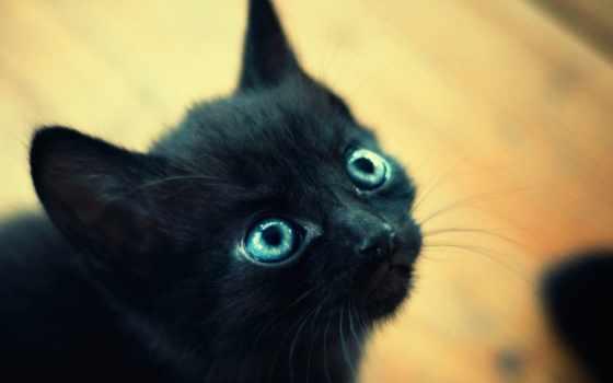 котенок, черный, глаза