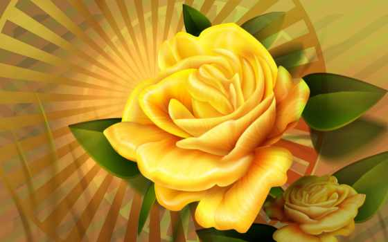 цветы, природа, роза