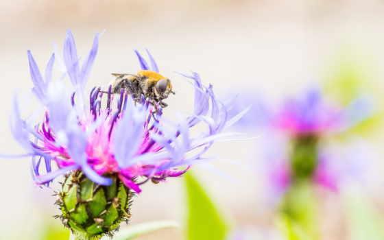 насекомое, макро, ipad, пчелка, шпалери, компьютер, weed, цветы, лепестки,