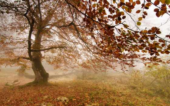 фотообои, дерево, фотообоев