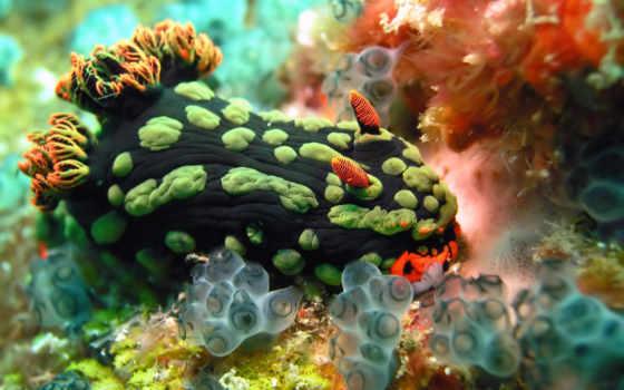 обитатели, морские, морских, глубин, сказочные, необычные, февр, самые, откроем,