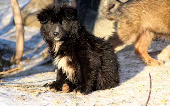 щенок, собака, снег, взгляд, бездомный, winter, собаки,