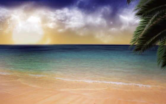 palm, ocean, закат