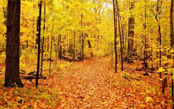 оц, pantalla, ecran, hojas, frunze, imagen, осень, bosque, otoño,
