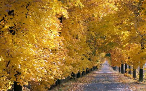 thu, mùa, vàng, những, rơi, hành, tuyệt, vũ,