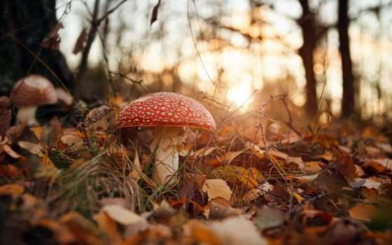 mushroom, осень, лес