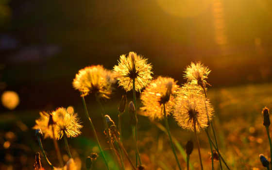 summer, тепло, цветы