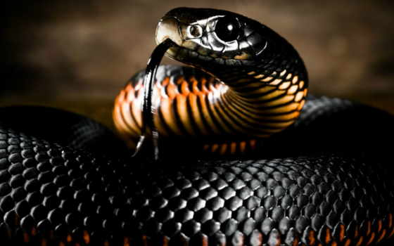 snake, змеи, голова