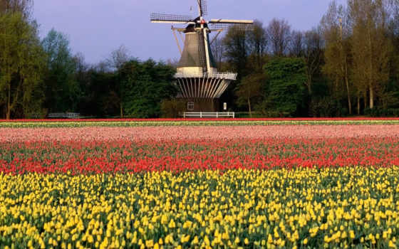 holland, mill, landscape