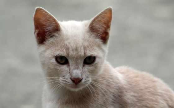 кот, larawan, vật, animal, whiskers, изображение,