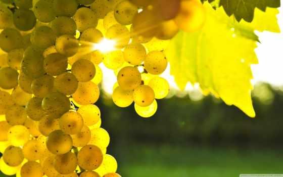 color, ароматизатор, абстрактные, мл, yellow, желтого, sveta, нм,