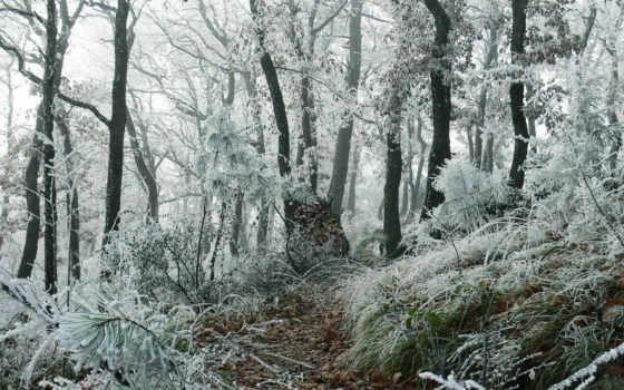 снег, первый