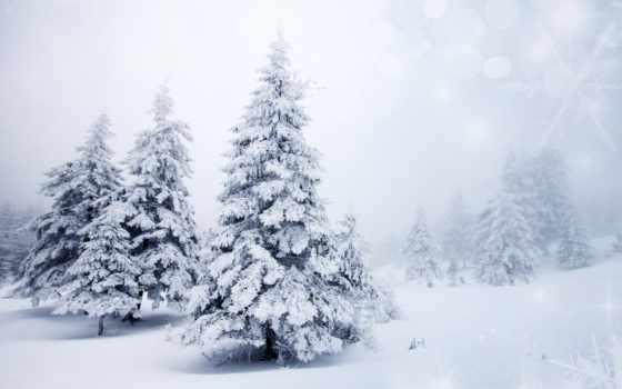 winter, снег, природа Фон № 52989 разрешение 7720x5000