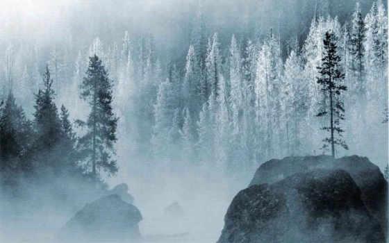 лес, зима, горы