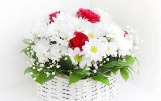 ромашки, цветы, букеты