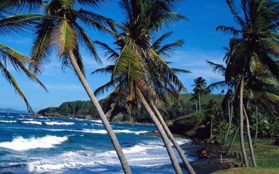 tropical, тропические, острова, пляж, берег, пальмы, lucia, www, остров, закат, берегу,