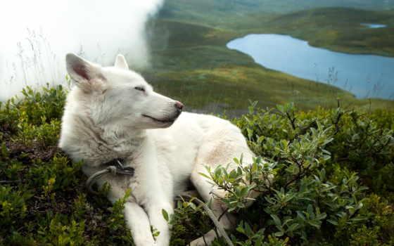 hund, vit, sj, buskar, bilder, weißer, see, büsche, fritid, und, die,