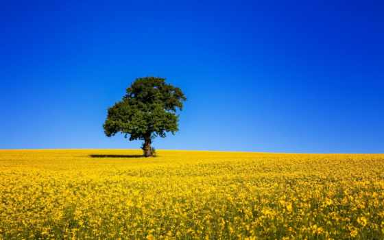 ukrainian, природа, небо, поле, украины, флаг, рапс, україни, прапор, дерево, красиво,