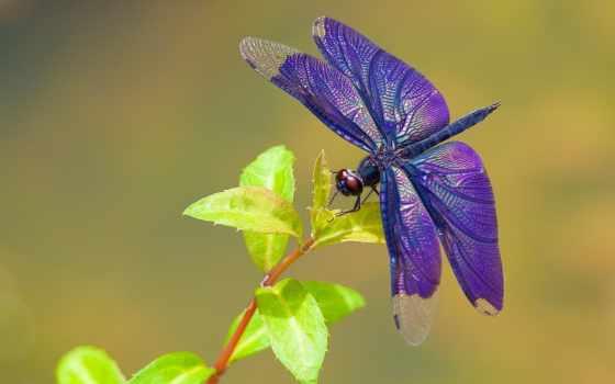 стрекоза, стрекозы, красивые, насекомые, картинка, zhivotnye, июл, макро,