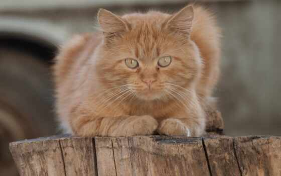 кот, medium, red, смотреть