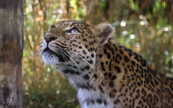 леопард, best, уж, loaded