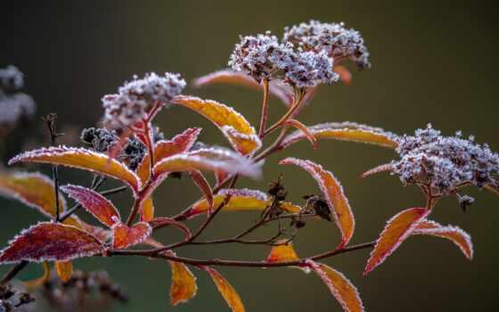 веточка, растение, freeze, кыргызстан, winter, иней, izmorozit, leaf, цветы, design