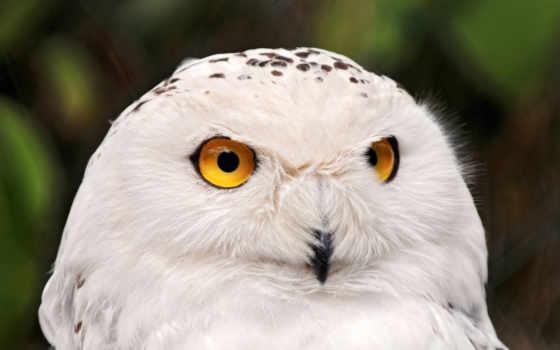 owl, животные Фон № 26858 разрешение 2560x1600
