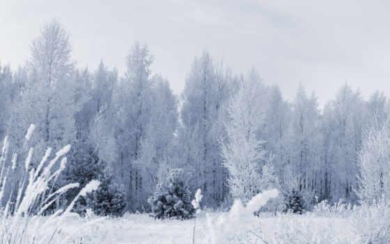 frozen, лес, desktop