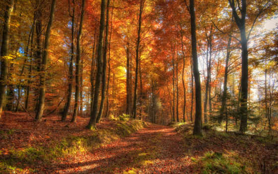 osen, les, priroda