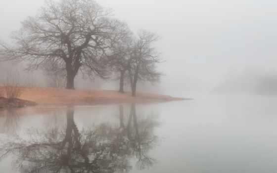 туман, water, река, trees, озеро, отражение, утки, берег, sun, природа,